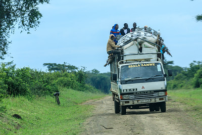 Human transport included, Kasenyi Plains, QENP, Uganda