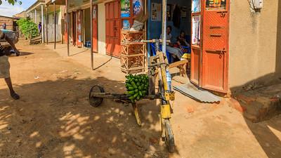 Tsukudu (Holroller), Kihihi, Uganda