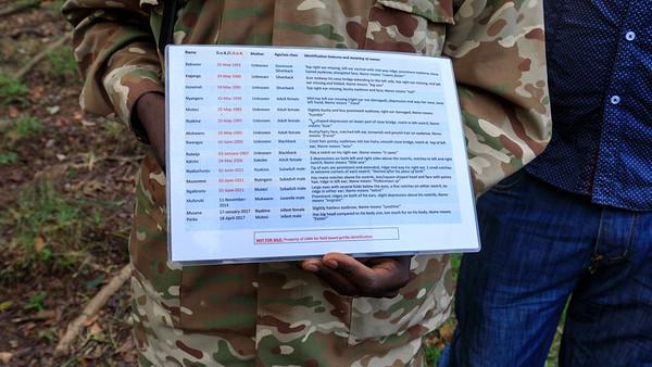 Groillas list and photos, Bwindi Impenetrable NP, Uganda