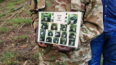 Groilla list and photos, Bwindi Impenetrable NP, Uganda