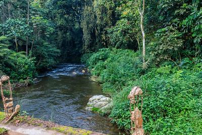 River in the Bwindi Impenetrable NP, Uganda