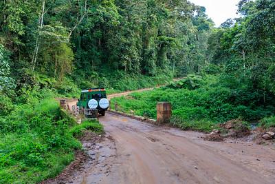 Bridge in the Bwindi Impenetrable NP, Uganda