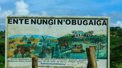 Werbung zur Erhaltung des ostafrikanischen Hausrinds Ankole