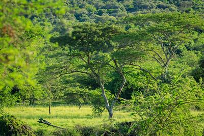 Savanna in the area of Mburo Safari Lodge, Uganda