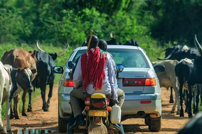 Cattle breeding on the borders of the Lake Mvuro NP, Uganda