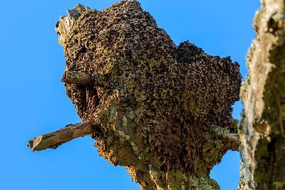 Termites in the area of Mburo Safari Lodge, Uganda