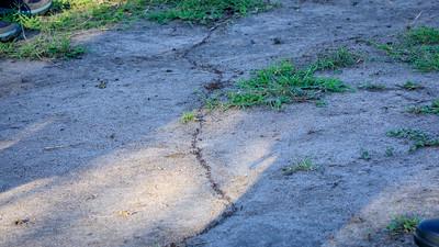 Marching ants in the Lake Mburo NP, Uganda