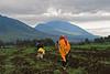On the way, morning dig. Virunga Mountains, Rwanda