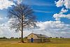 Church and lone tree. Kitgum district, northern Uganda