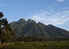 Parc National des Volcans, Rwanda