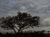 Tree and clouds, near Kihihi, Uganda