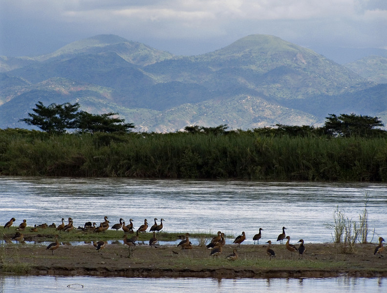 Waterfowl, Parc National de la Rusizi, Burundi