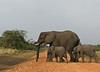 Elephants, Queen Elizabeth NP, Uganda