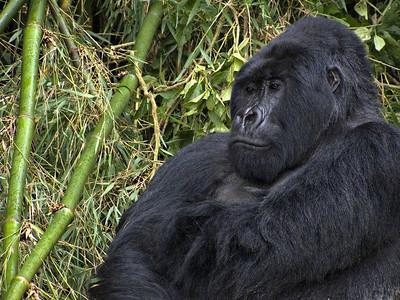 Uganda, Rwanda, Burundi, January 2009
