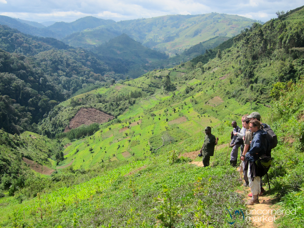 Gorilla Trekking, Just Before the Forest - Bwindi National Park, Uganda
