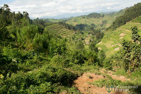 Gorilla Trek Begins in the Fields and Villages Near Bwindi National Park - Uganda