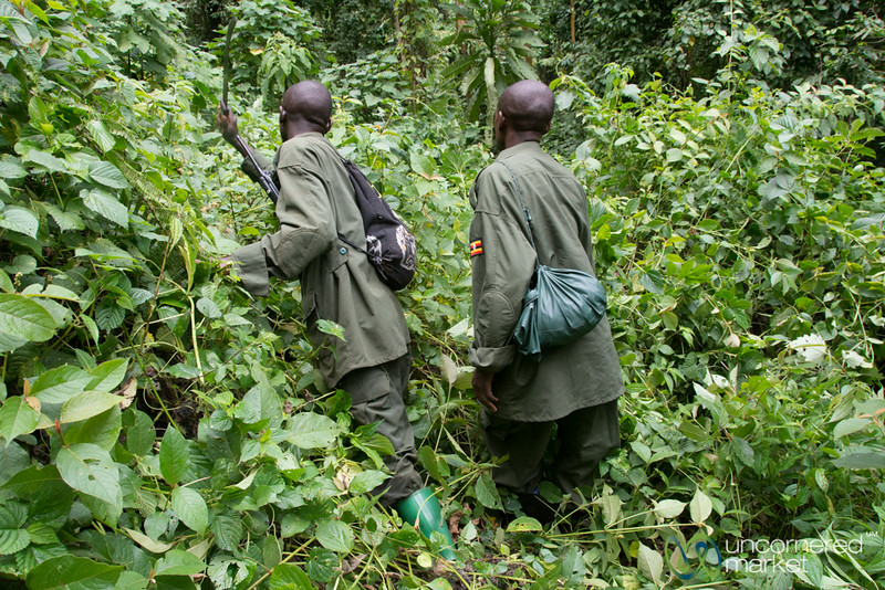 Our Gorilla Trackers Clear the Path with Machetes - Bwindi National Park, Uganda
