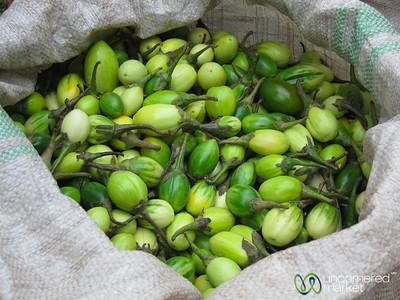 Green Eggplant or Bitter Tomatoes - Lake Bunyonyi, Uganda