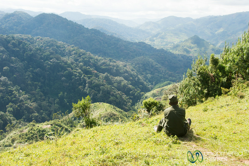 Our Gorilla Trekking Guide Waits for Information - Bwindi National Park, Uganda