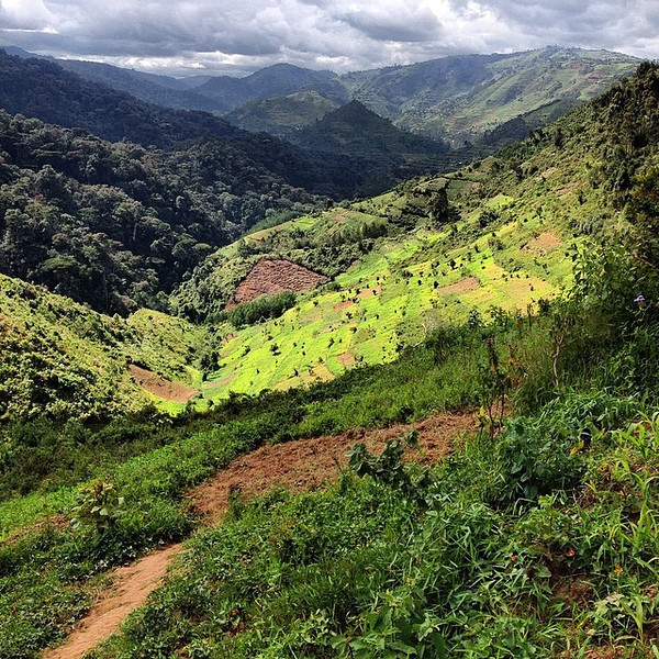Southwestern Uganda, stripes of land and light. Taken between the local farms and jungles of Bwindi Impenetrable National Park. via Instagram http://ift.tt/1qolt5j