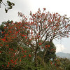 Lots of blooming trees at time I was in Uganda. Bwindi area