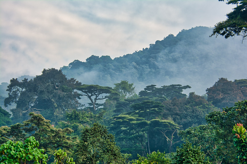 http://www.dreamstime.com/royalty-free-stock-image-rainforest-canopy-morning-mist-bwindi-impenetrable-national-park-lush-green-surrounded-image134887506