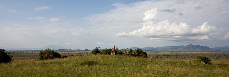 A giraffe and the valley.<br /> <br /> Location: Kidepo Valley National Park, Uganda<br /> <br /> Lens used: 10-22mm f3.5-4.5