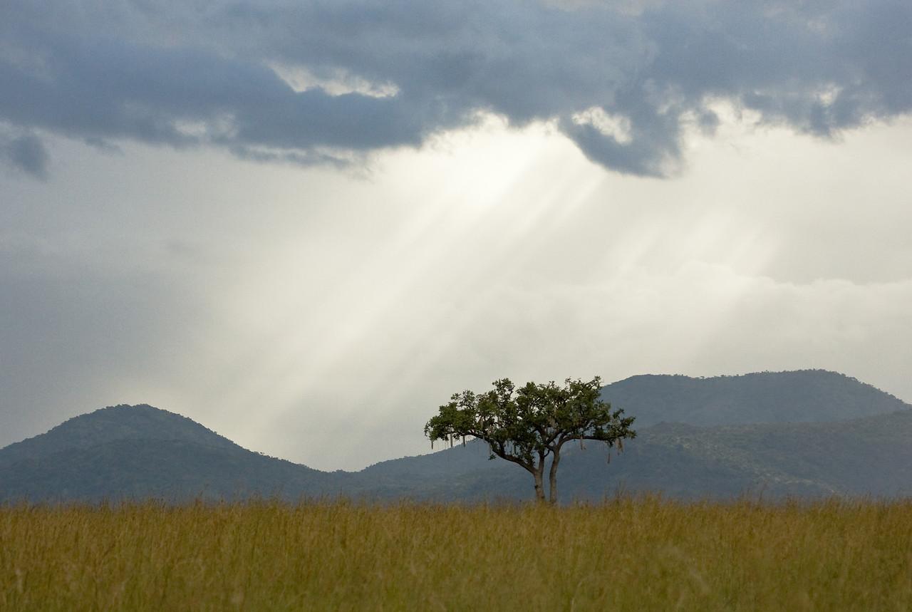 Rays of light and a sausage tree one late afternoon.<br /> <br /> Location: Kidepo Valley National Park, Uganda<br /> <br /> Lens used: 100-400mm f4.5-5.6 IS