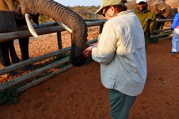 Wild Horizons Elephant and Leopard Preserve