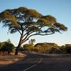 Zimbabwe landscape near Vic Falls