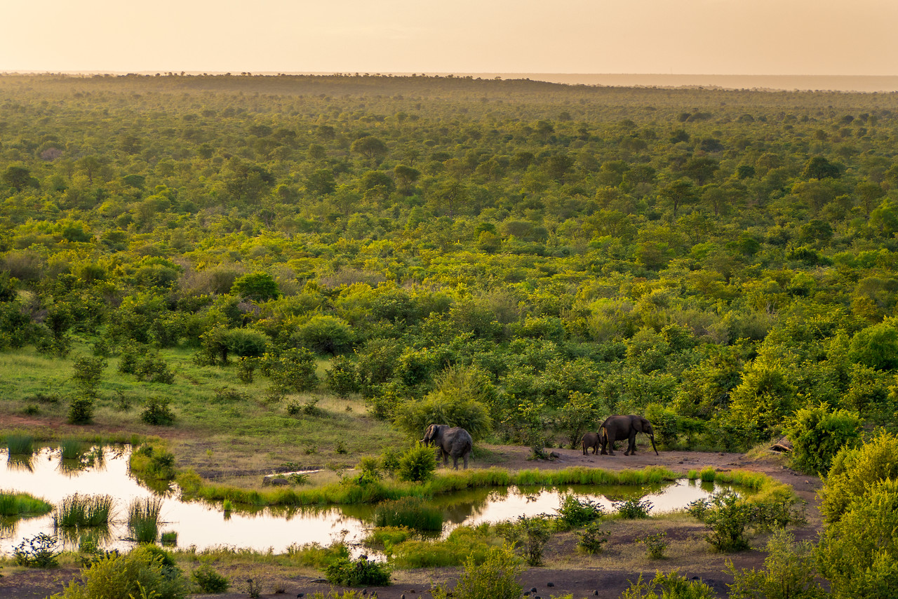 Sunset over a watering hole in Zimbabwe