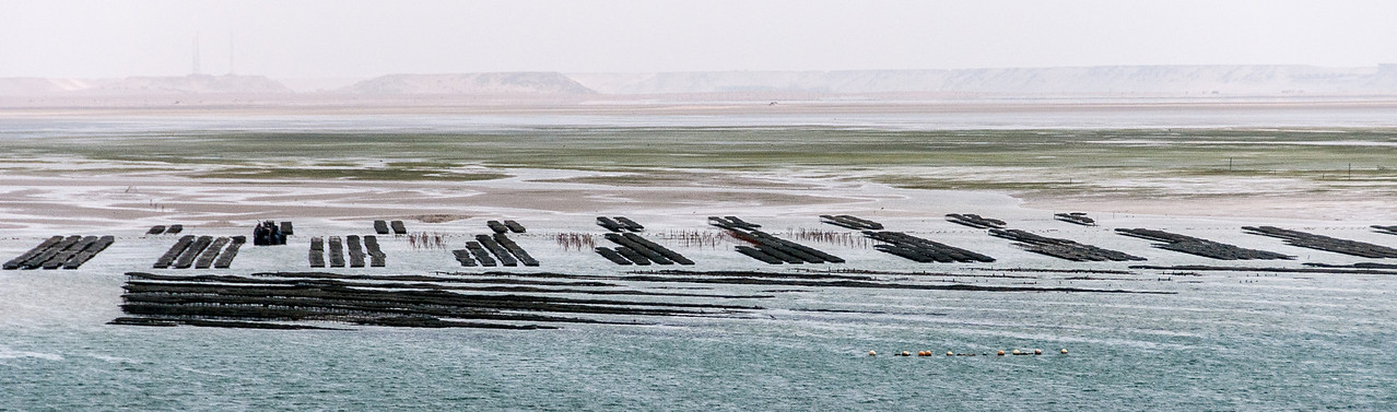 Oyster farm in Dakhla, Western Sahara