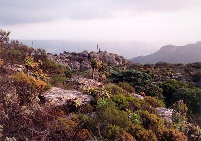 Fynbos at Mariepskop
