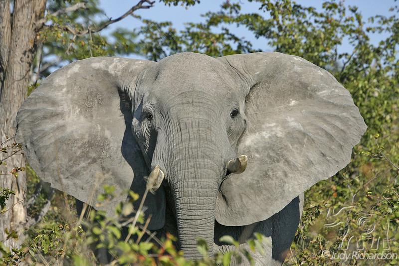 Elephant warning!