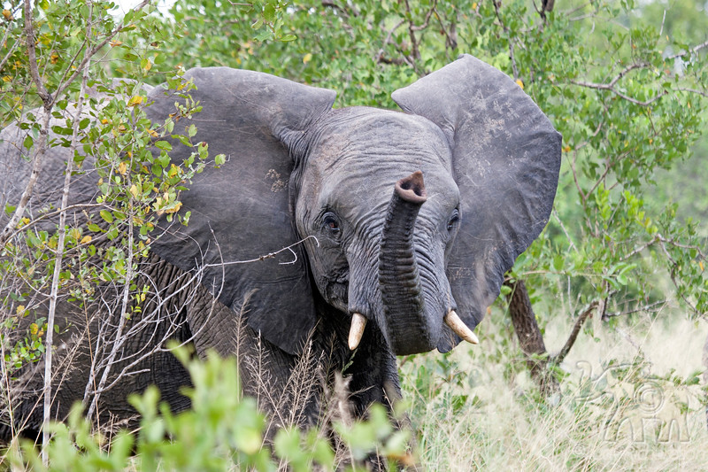 Elephant taking a smell of us - 2014