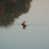 Woman fishing in Zambezi River on border of  the National Park