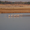Birdlife is quite prolific and varied. South Luangwa National Park, Zambia