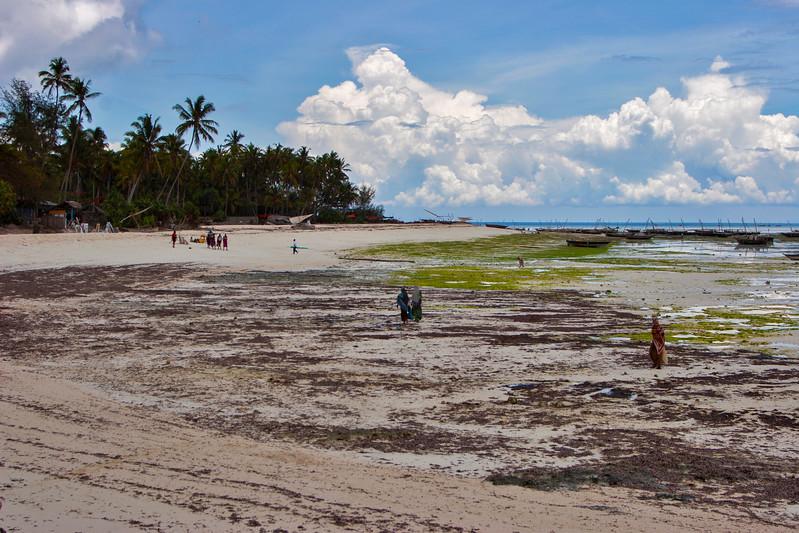 Beach at Nungwi, Zanzibar,  Tanzania, Africa.  March 2008