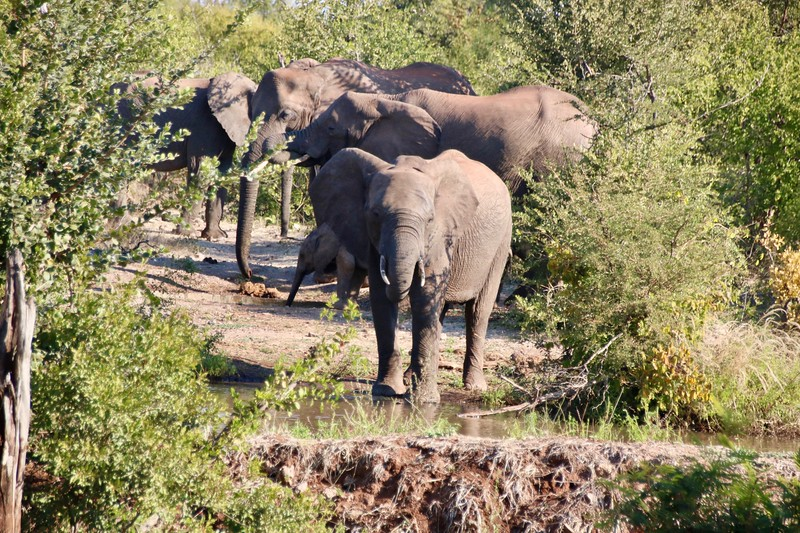 Elephants at the Old Drift Lodge