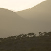 Acacia trees in silhouette against the sunrise, South Africa