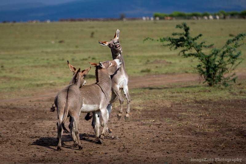 Overjoyed Donkey