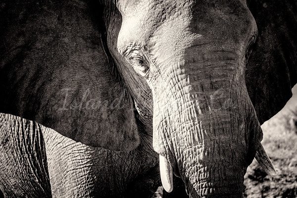 The Wise Elephant