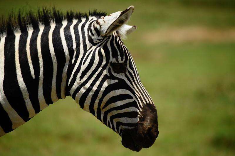 BLACK WITH WHITE STRIPES, OR WHITE WITH BLACK STRIPES?