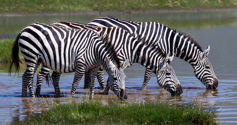 Ngorongoro-501