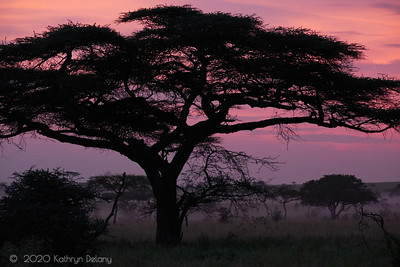 Sunrise and the Acacia tree