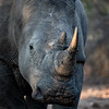 Rascing Extinction