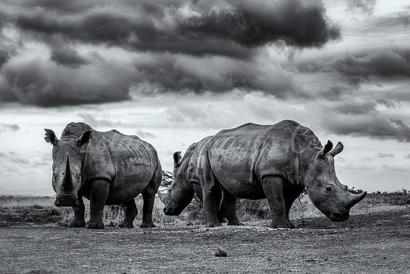 Last of the Rhinos