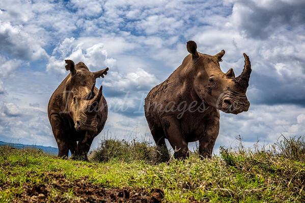 Rhino Boys Club