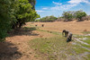 Just a typical day.  S Luangwa National Park and the river bed at Mufwe Lodge
