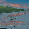 Ariel view of Flamingoes in Lake Nakuru, Kenya